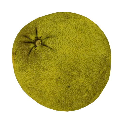 Pomelo Citrus maxima - RT Edition