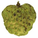 Sugar Apple - ED Edition